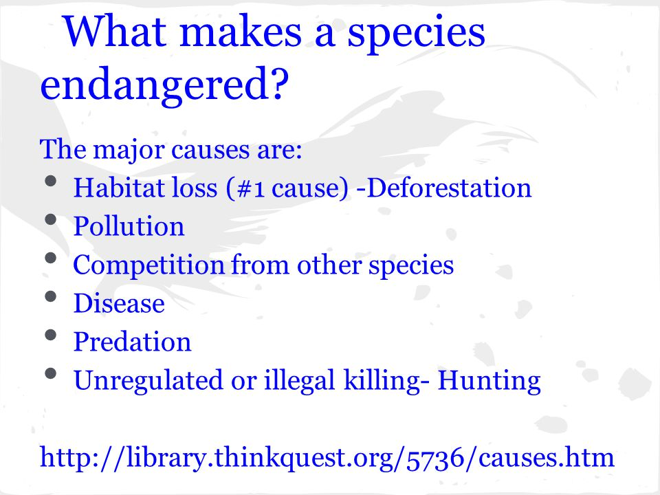 What makes a species endangered