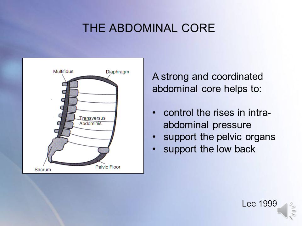 THE ABDOMINAL CORE A strong and coordinated abdominal core helps to: