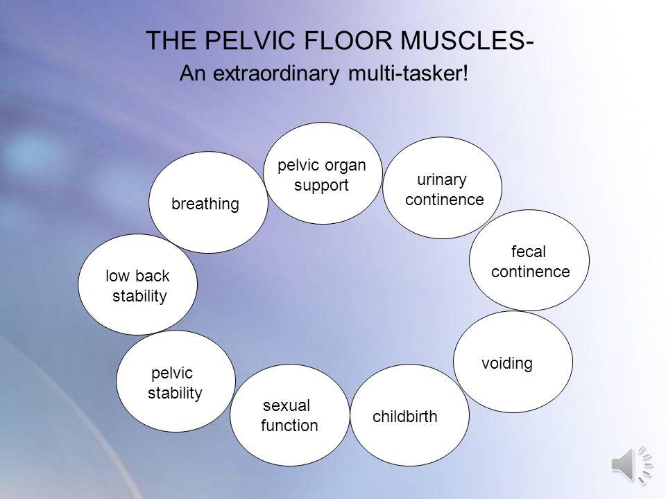 THE PELVIC FLOOR MUSCLES- An extraordinary multi-tasker!