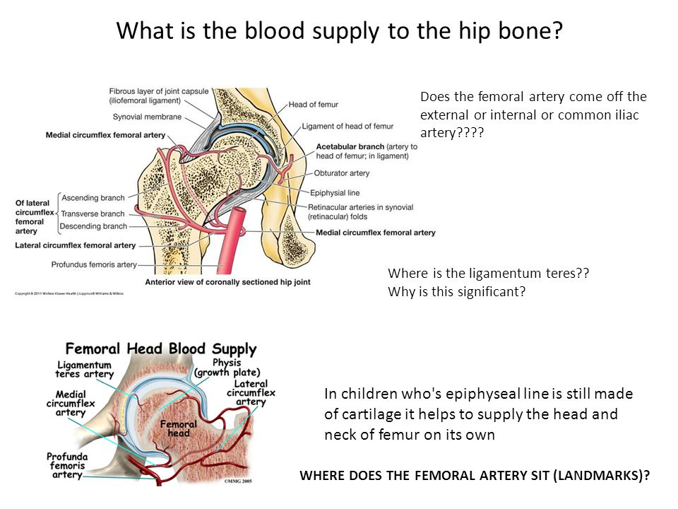 What is the blood supply to the hip bone