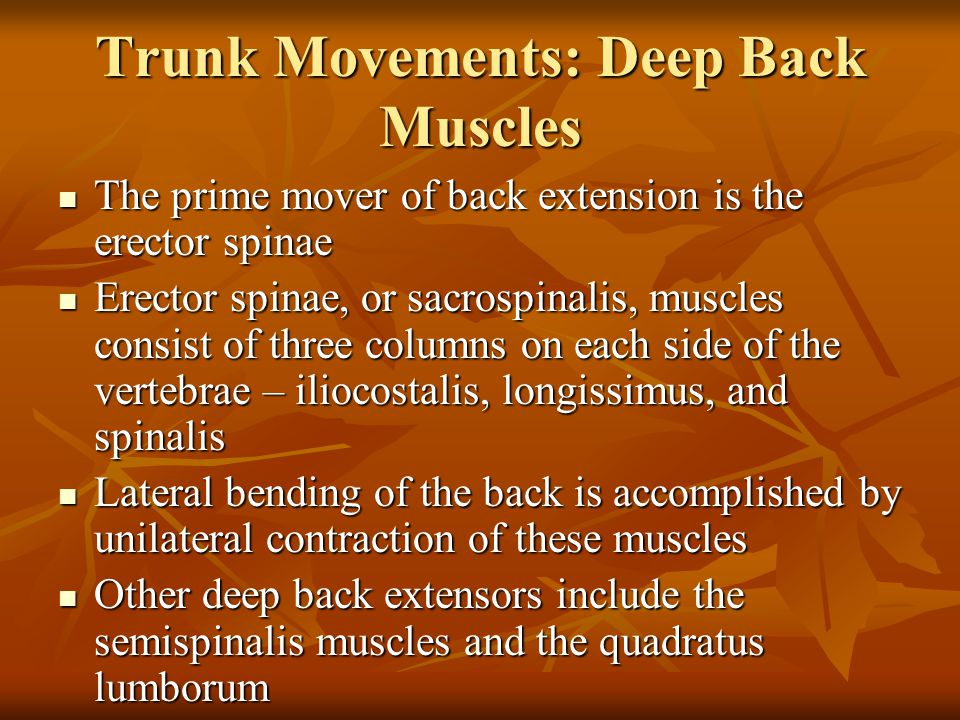 Trunk Movements: Deep Back Muscles