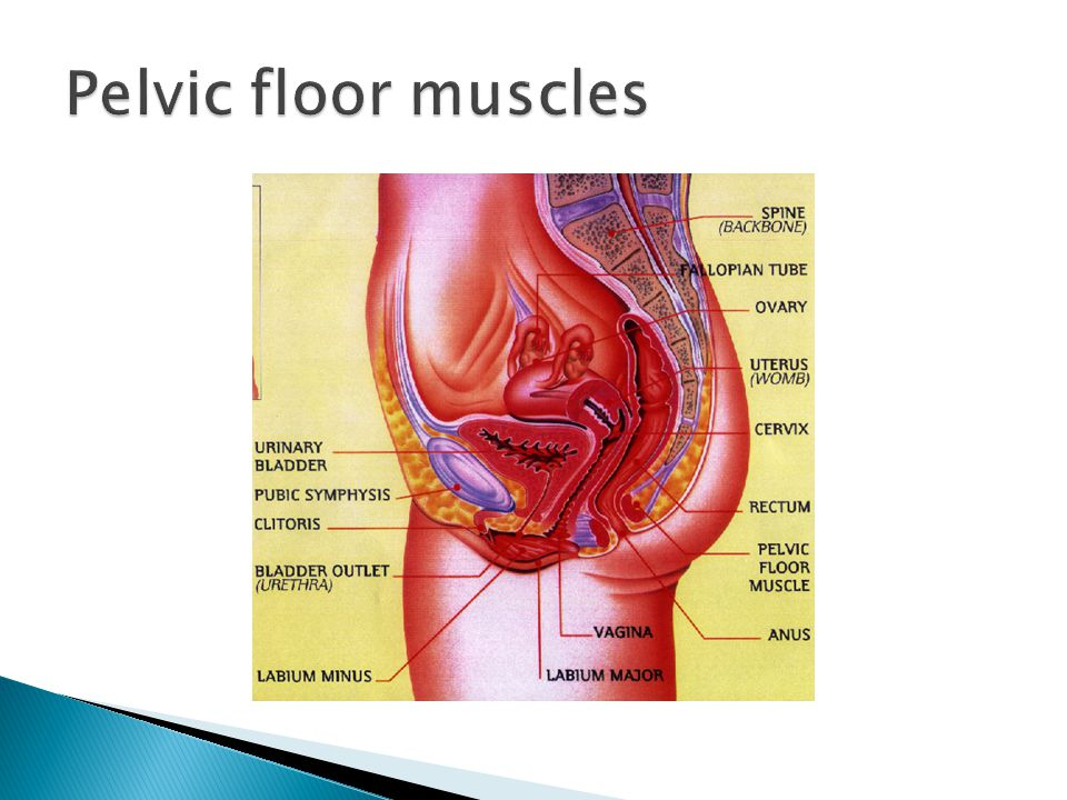 Pelvic Floor Muscle training The role of general exercise ...