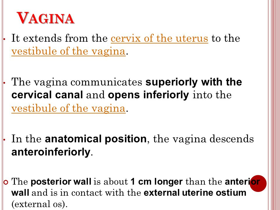 Vagina It extends from the cervix of the uterus to the vestibule of the vagina.