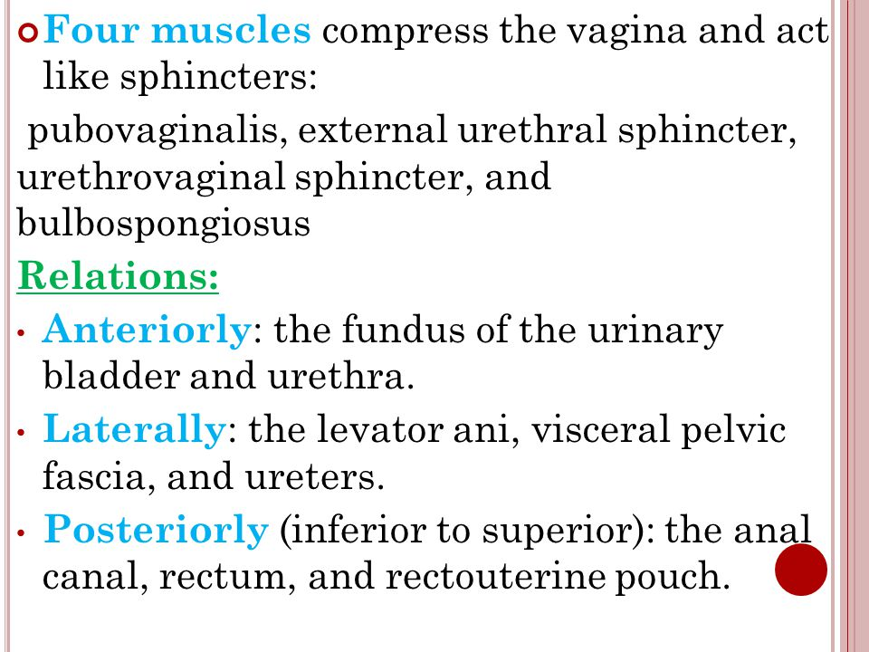 Four muscles compress the vagina and act like sphincters: