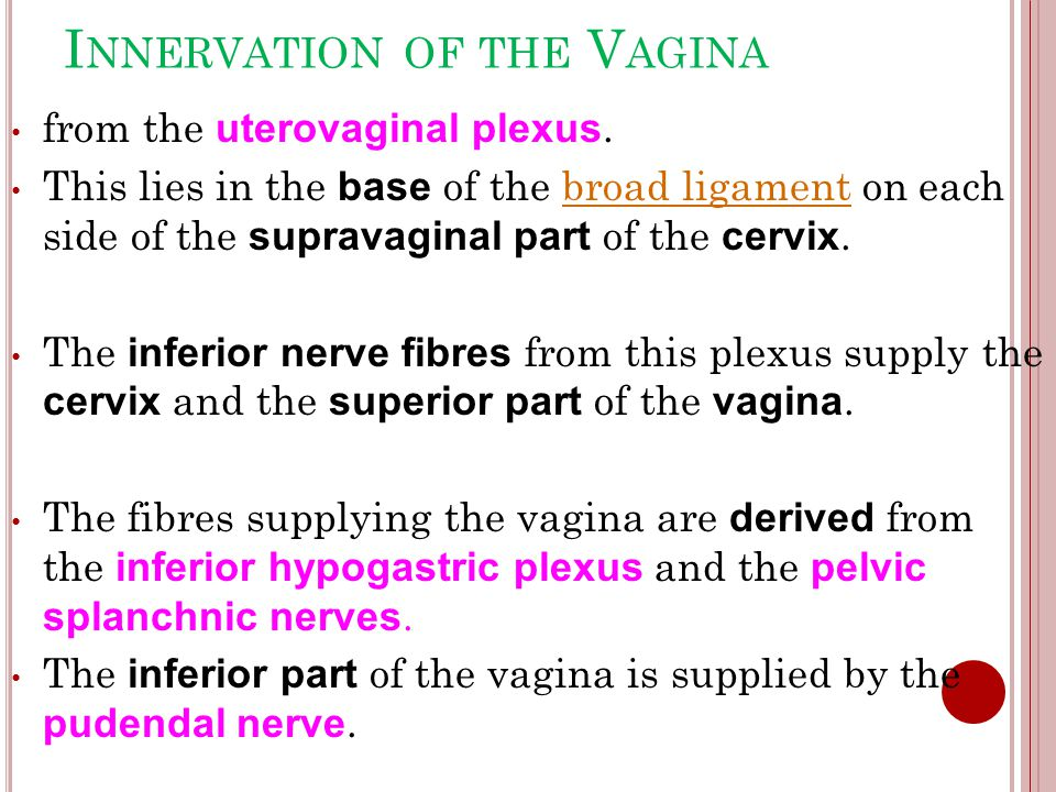 Innervation of the Vagina