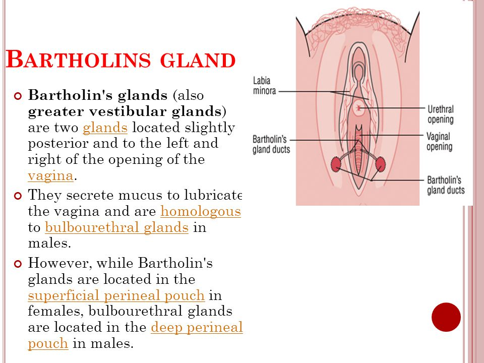 Bartholins gland