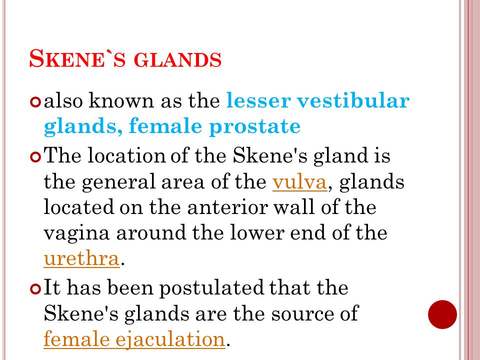 Skene`s glands also known as the lesser vestibular glands, female prostate.
