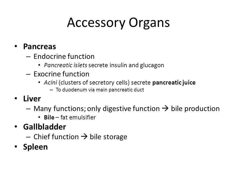 Accessory Organs Pancreas Liver Gallbladder Spleen Endocrine function