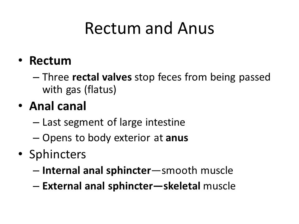 Rectum and Anus Rectum Anal canal Sphincters