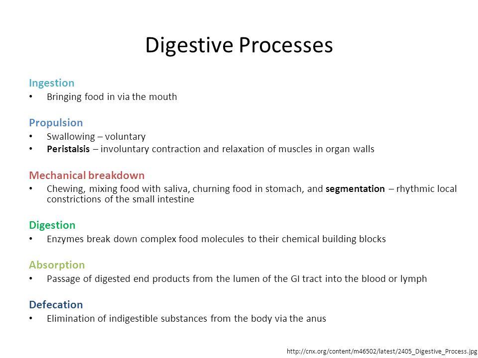 Digestive Processes Ingestion Propulsion Mechanical breakdown