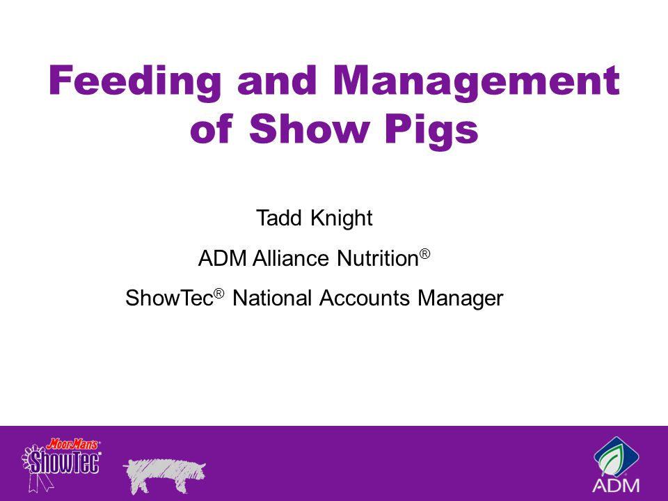 feeding and management of swine Miscellaneous feeds which can be fed to pigs: swill (kitchen waste including left over of human food, vegetables, meat and fish cuttings): composition and quantity vary so greatly that it is difficult to indicate feeding values.