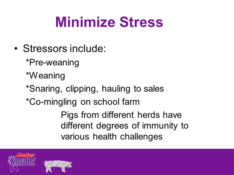 Minimize Stress Stressors include: *Pre-weaning *Weaning
