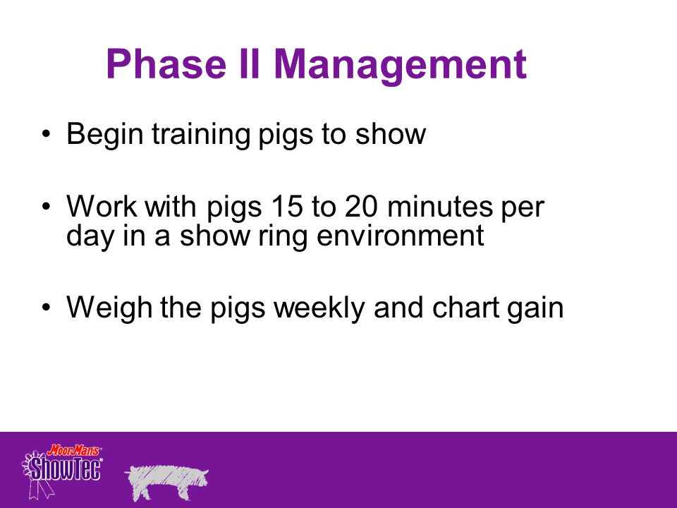 Phase II Management Begin training pigs to show