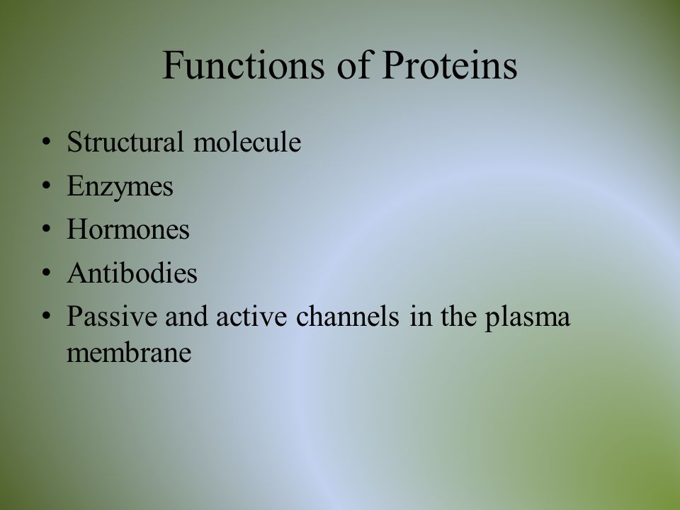 Functions of Proteins Structural molecule Enzymes Hormones Antibodies