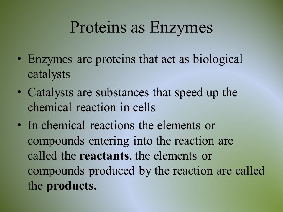 Proteins as Enzymes Enzymes are proteins that act as biological catalysts. Catalysts are substances that speed up the chemical reaction in cells.