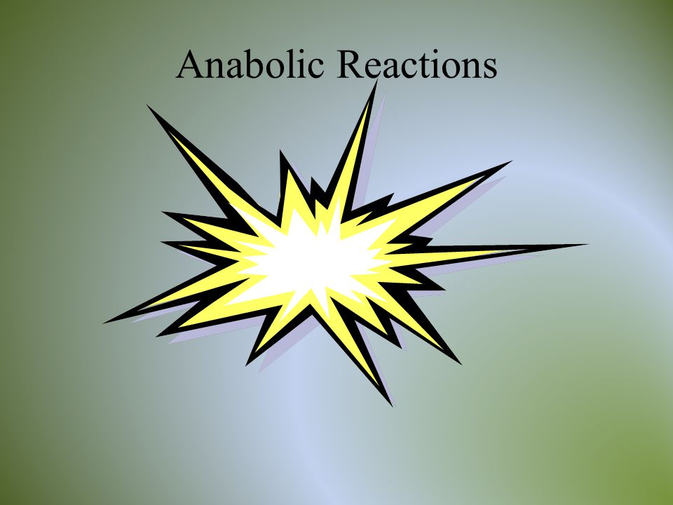 Anabolic Reactions