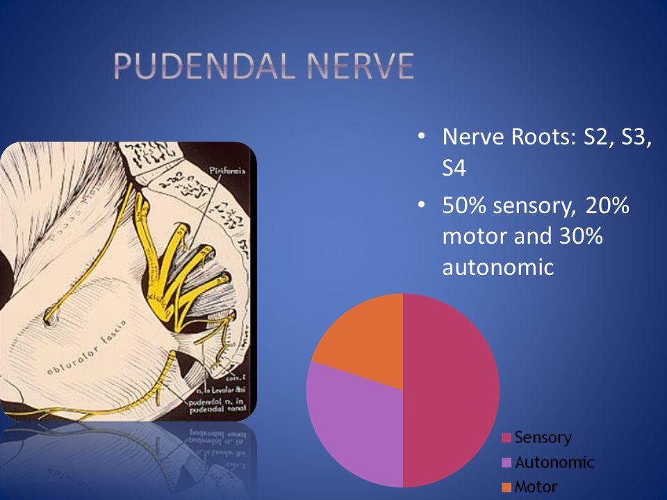 Pudendal Nerve Nerve Roots: S2, S3, S4