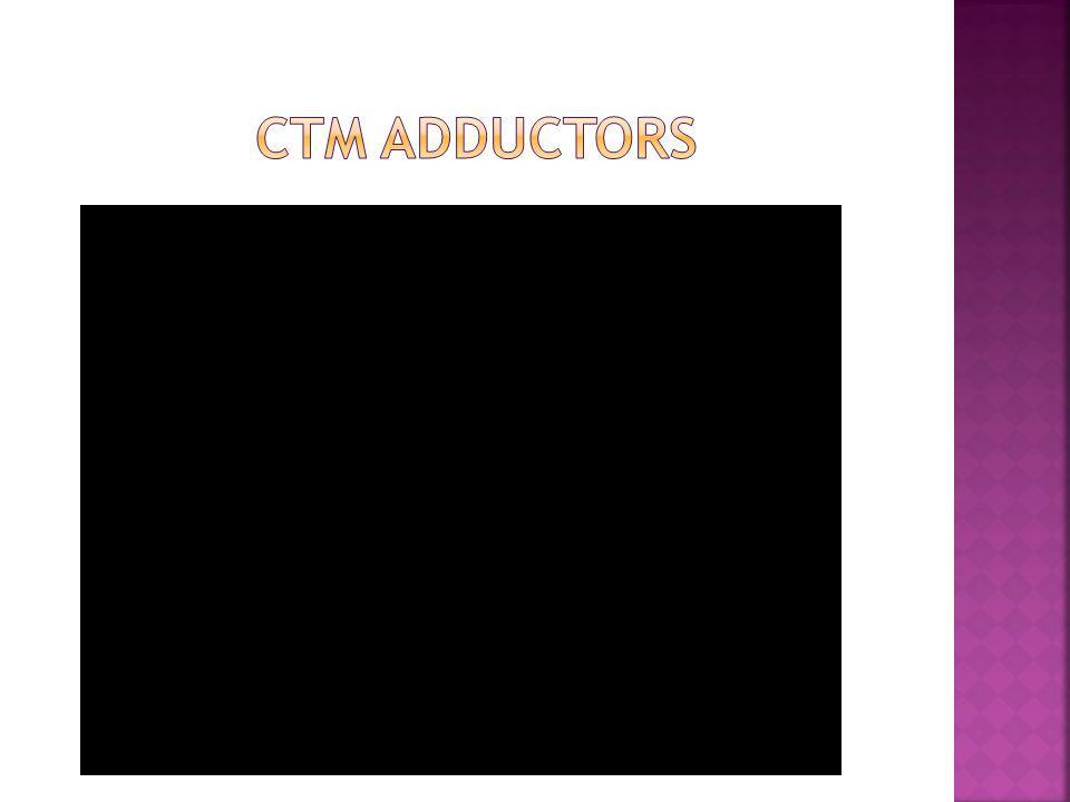 CTM Adductors