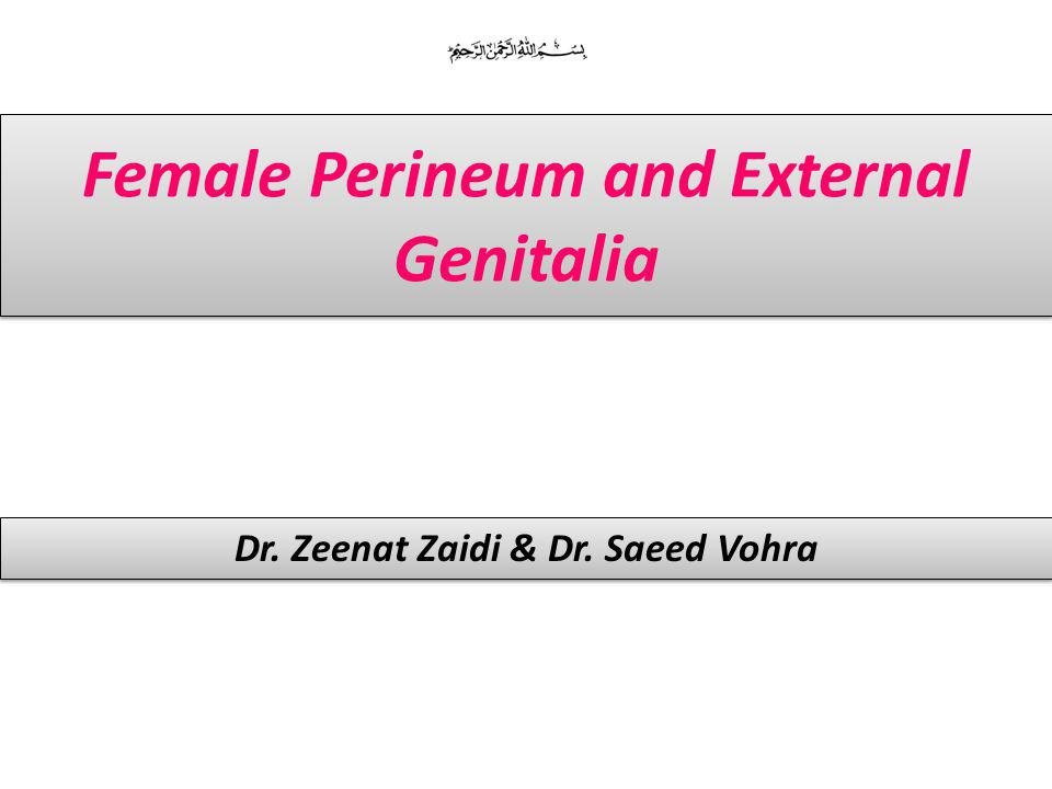 Female Perineum and External Genitalia