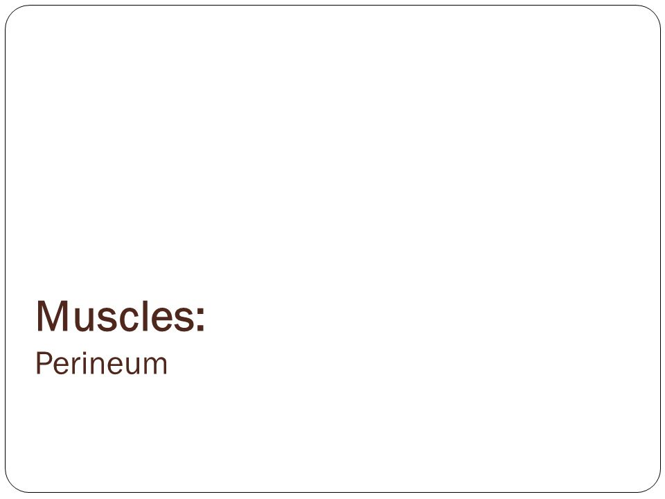 Muscles: Perineum