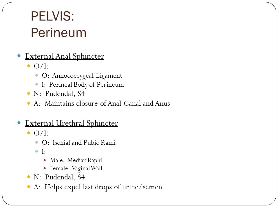 PELVIS: Perineum External Anal Sphincter External Urethral Sphincter