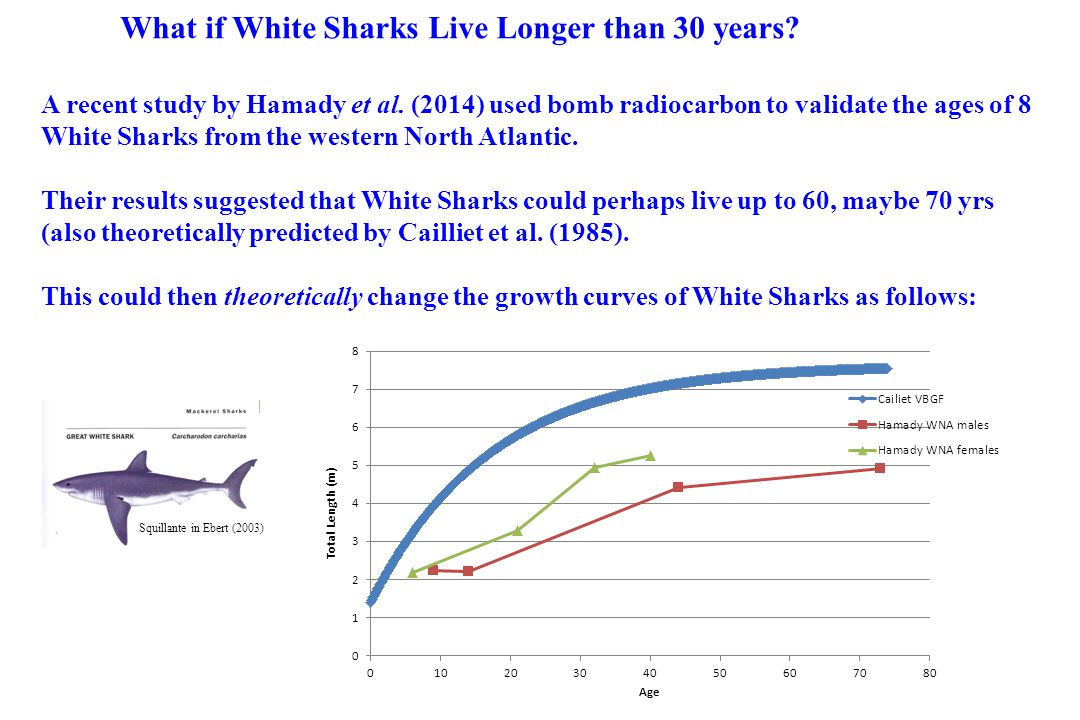 What if White Sharks Live Longer than 30 years