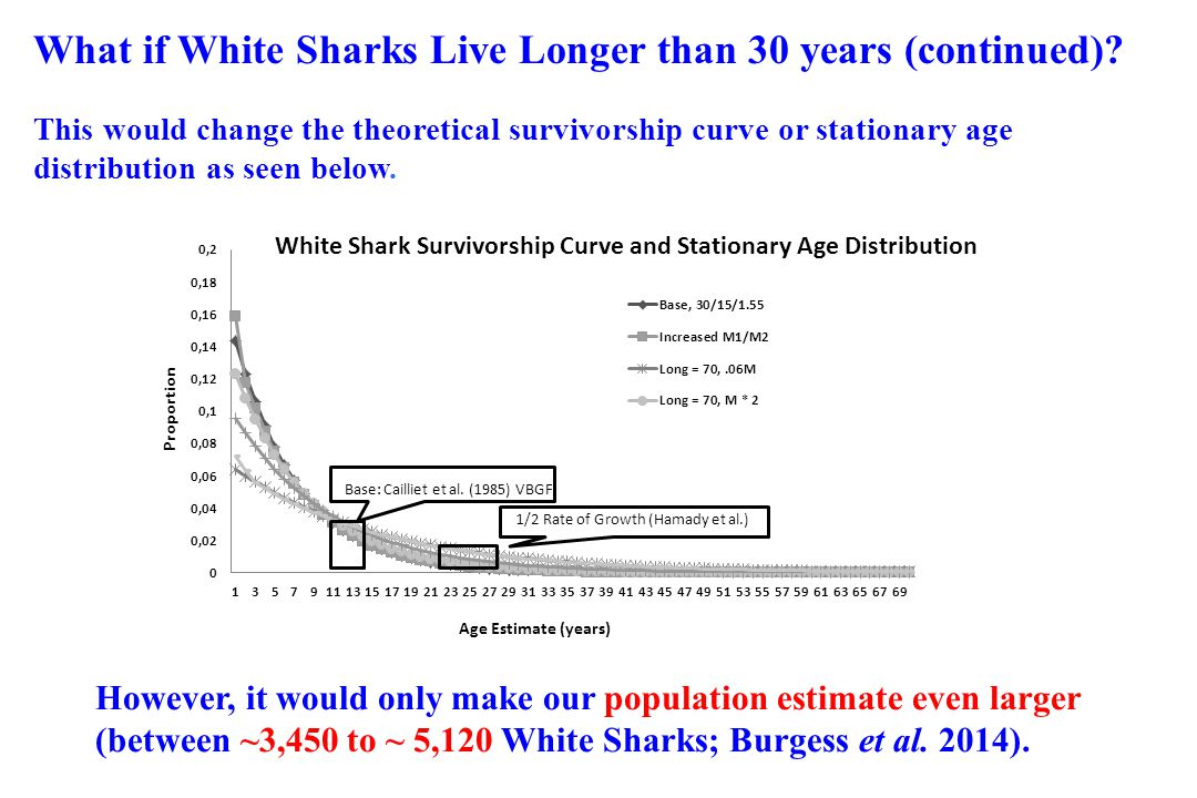 What if White Sharks Live Longer than 30 years (continued)
