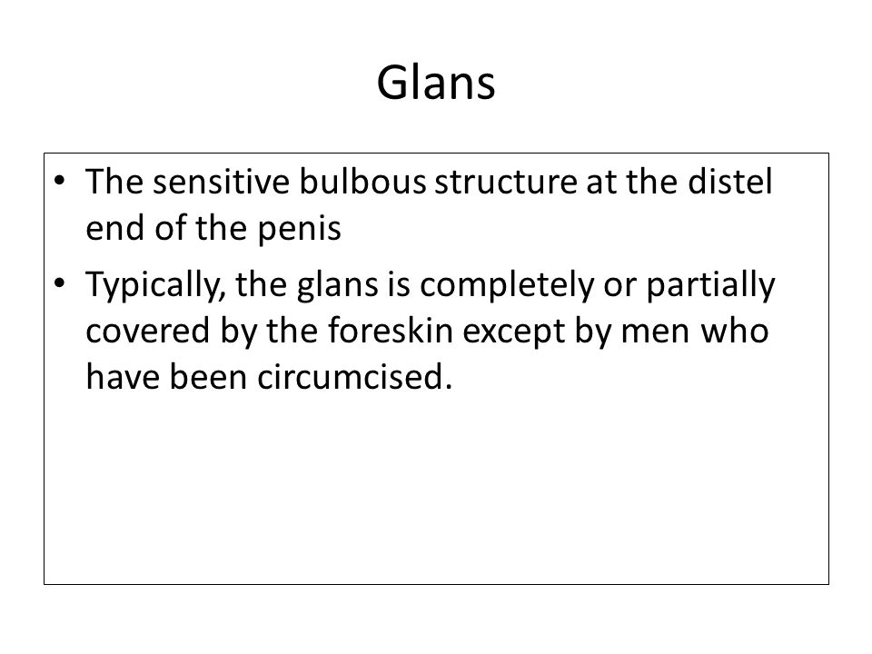 Glans The sensitive bulbous structure at the distel end of the penis