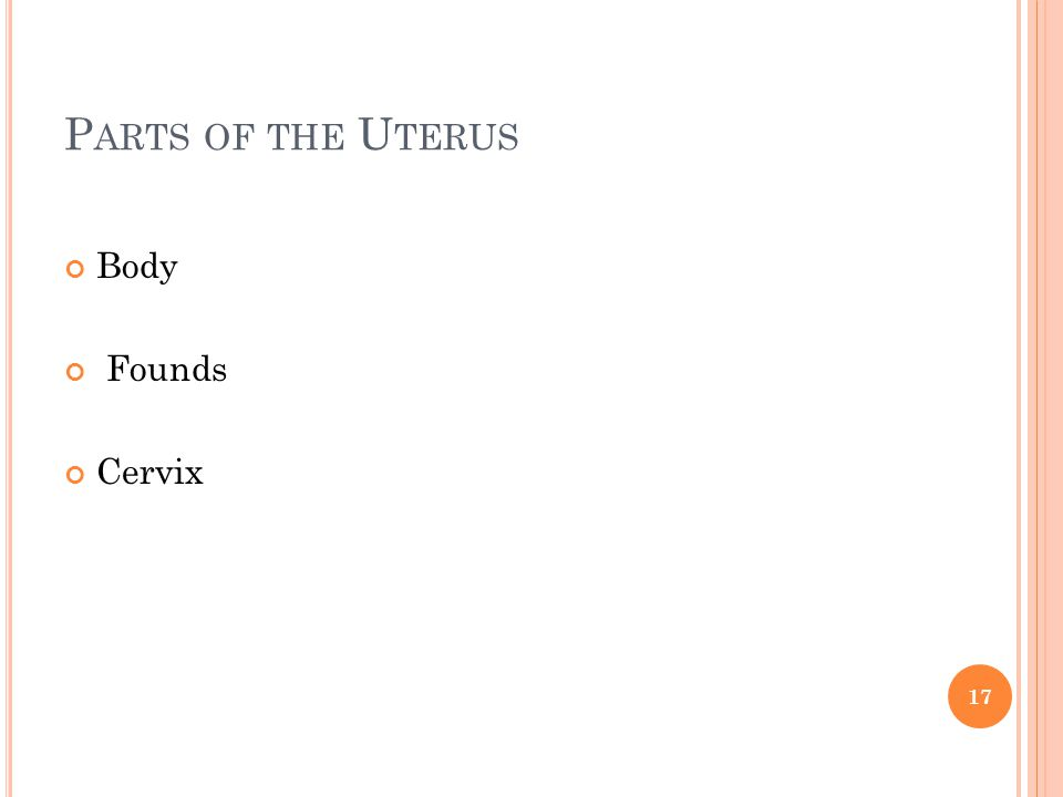 Parts of the Uterus Body Founds Cervix