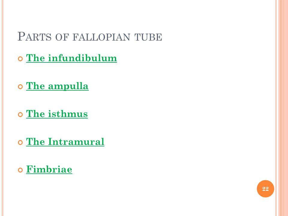 Parts of fallopian tube