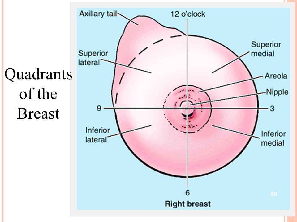 Quadrants of the Breast