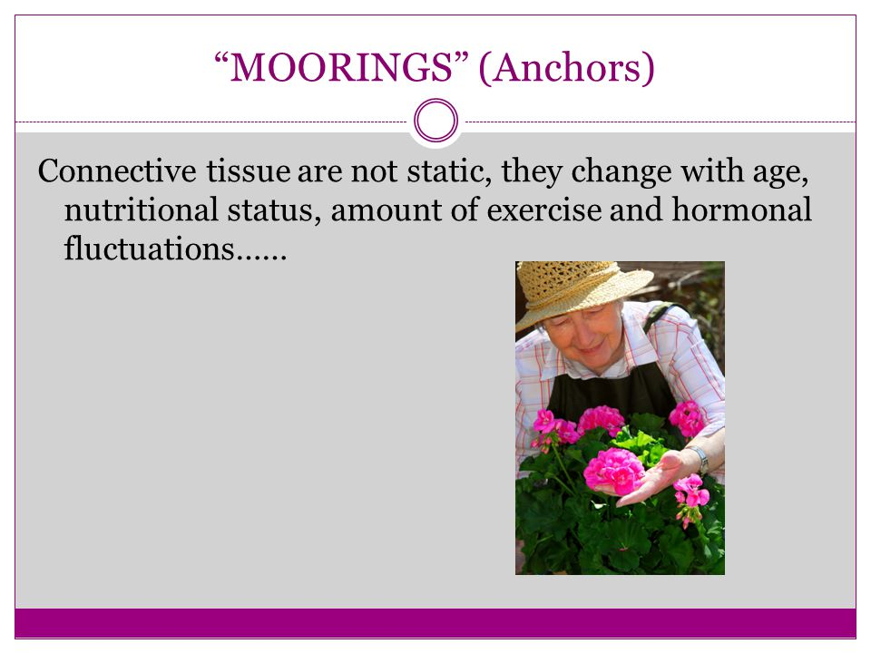 MOORINGS (Anchors) Connective tissue are not static, they change with age, nutritional status, amount of exercise and hormonal fluctuations……