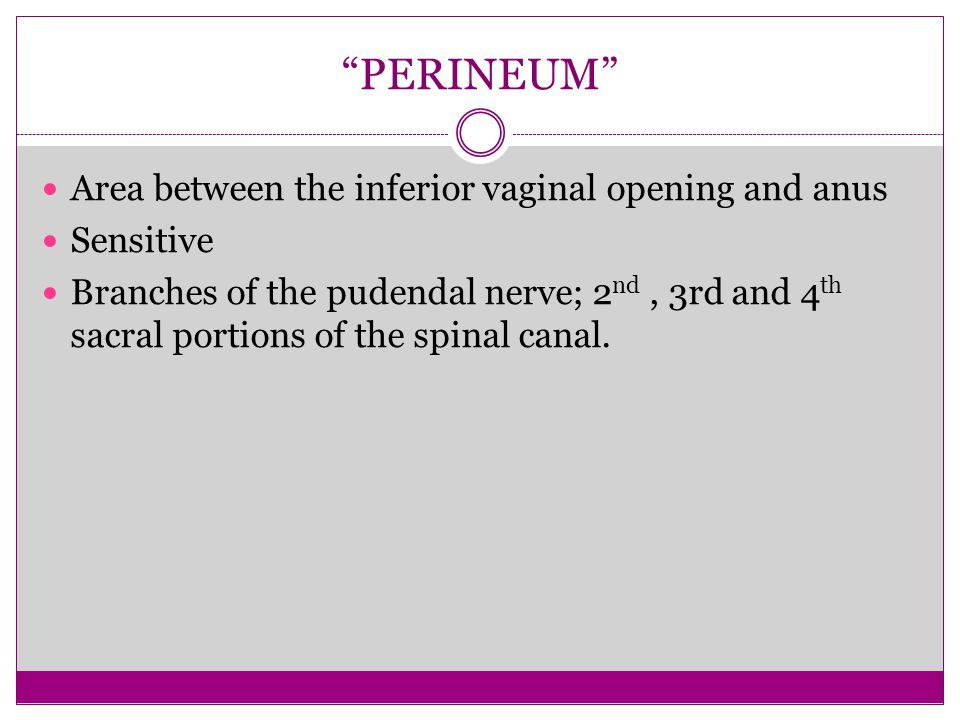 PERINEUM Area between the inferior vaginal opening and anus