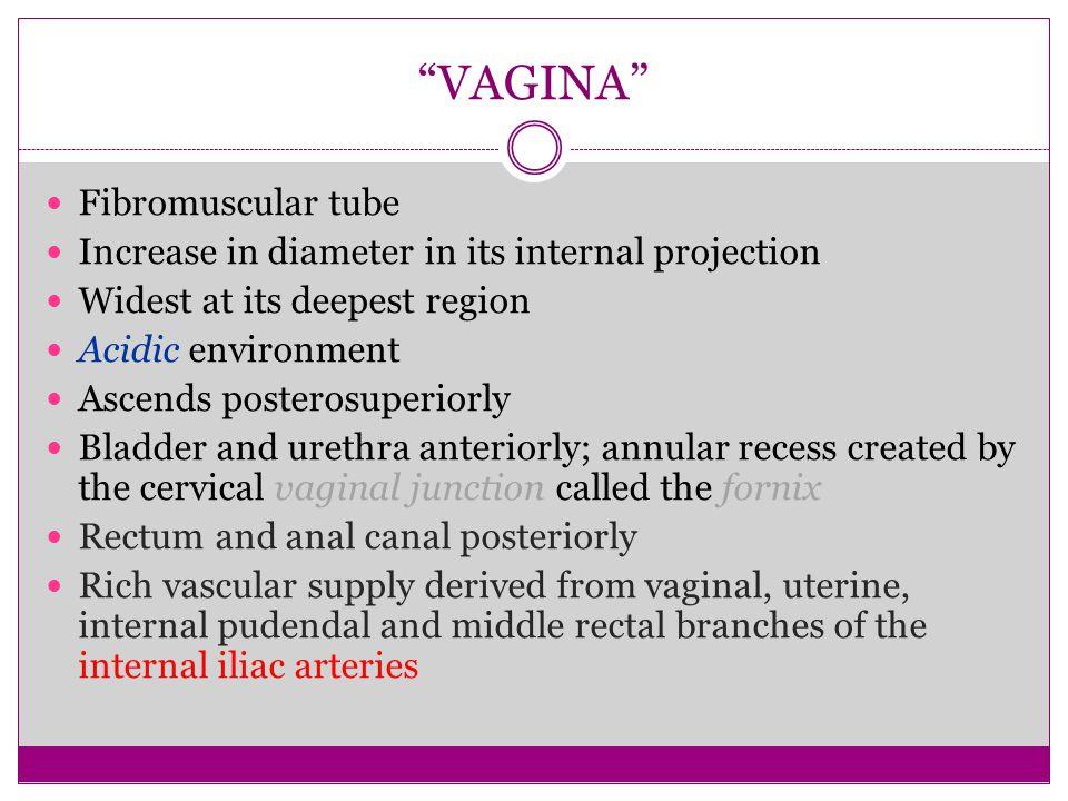 VAGINA Fibromuscular tube