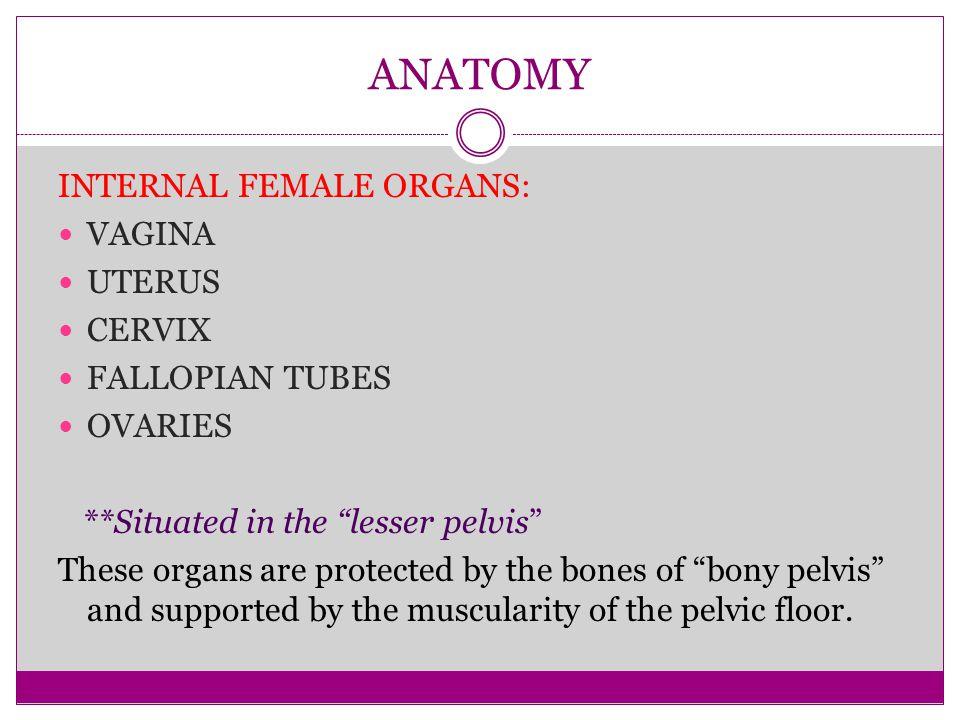 ANATOMY INTERNAL FEMALE ORGANS: VAGINA UTERUS CERVIX FALLOPIAN TUBES