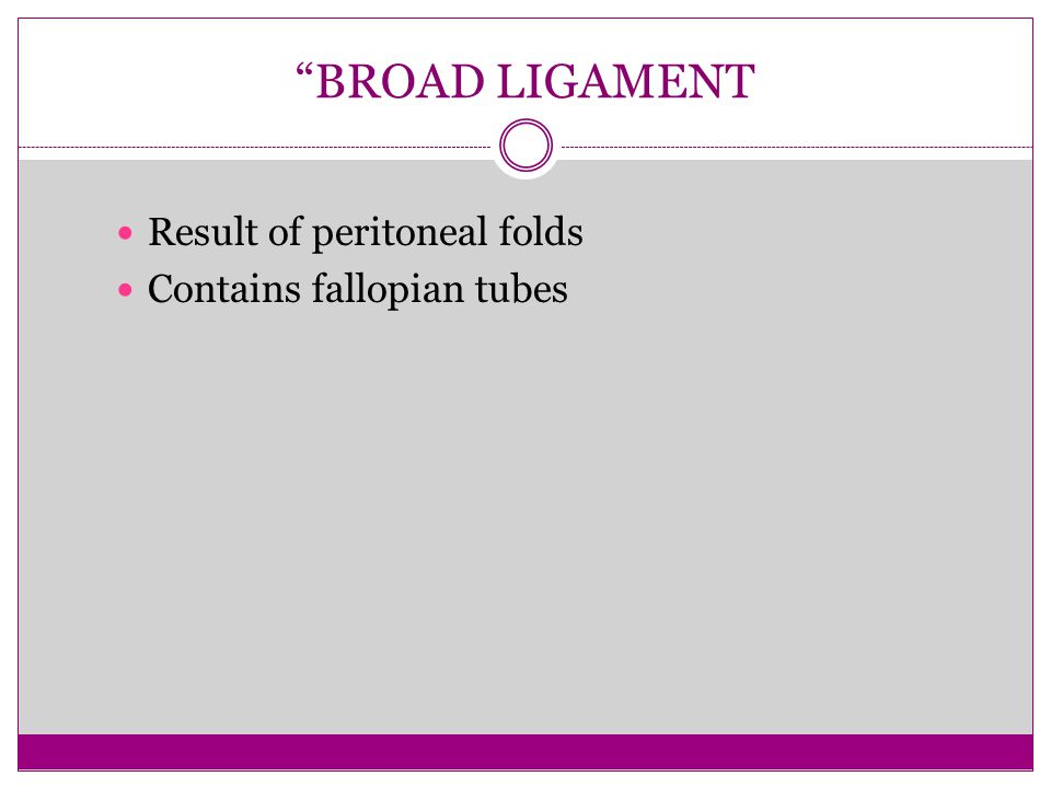 BROAD LIGAMENT Result of peritoneal folds Contains fallopian tubes