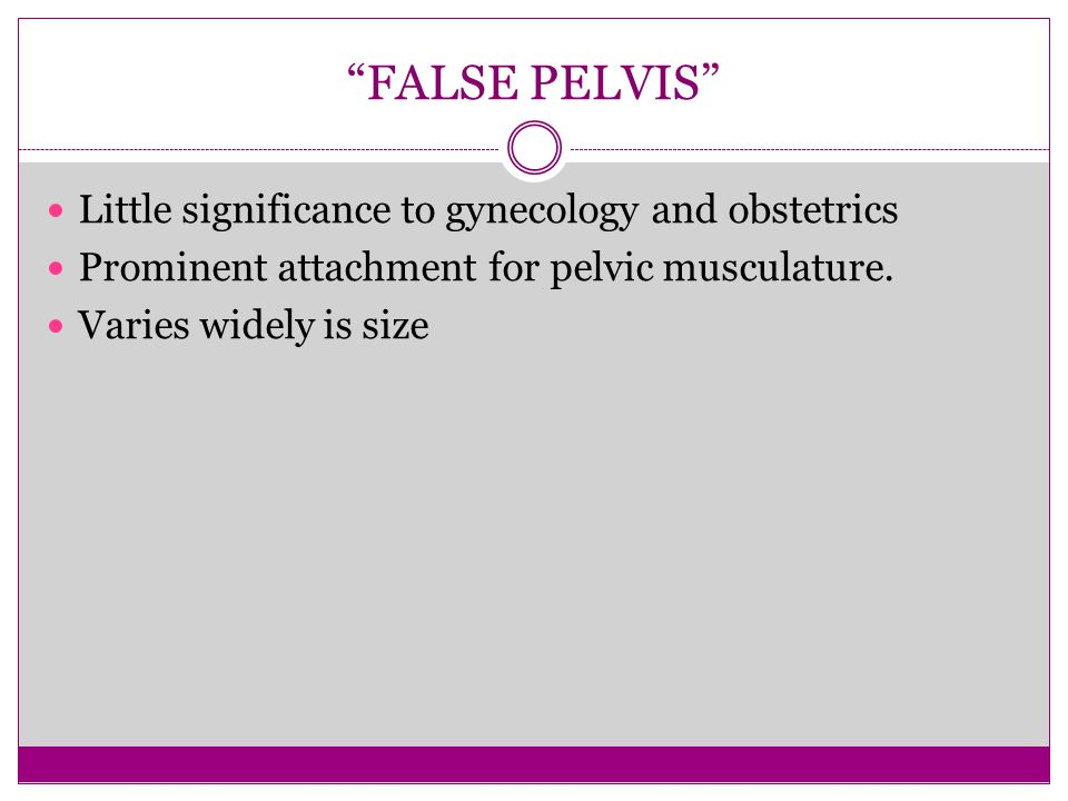FALSE PELVIS Little significance to gynecology and obstetrics