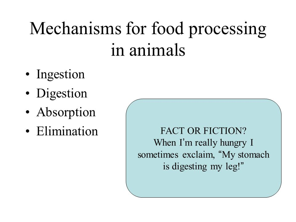 Mechanisms for food processing in animals