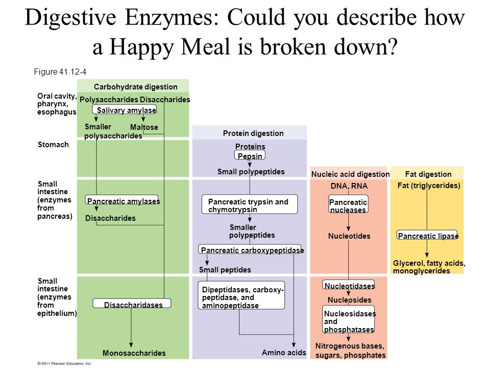 Digestive Enzymes: Could you describe how a Happy Meal is broken down