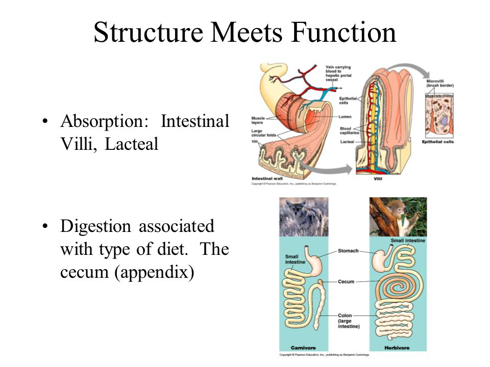 Structure Meets Function