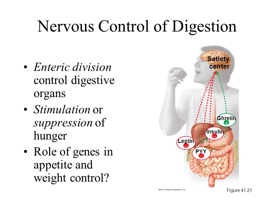 Nervous Control of Digestion Figure 41.21
