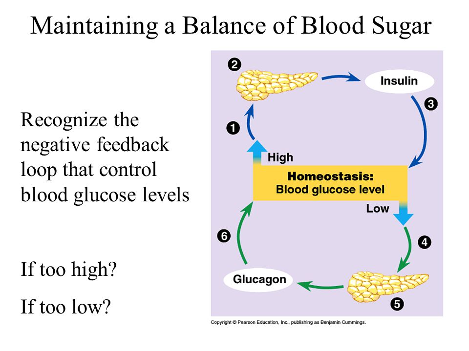 Maintaining a Balance of Blood Sugar
