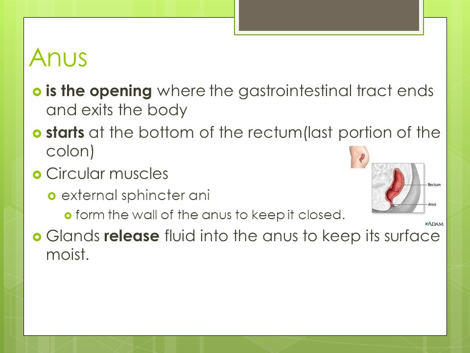 Anus is the opening where the gastrointestinal tract ends and exits the body. starts at the bottom of the rectum(last portion of the colon)