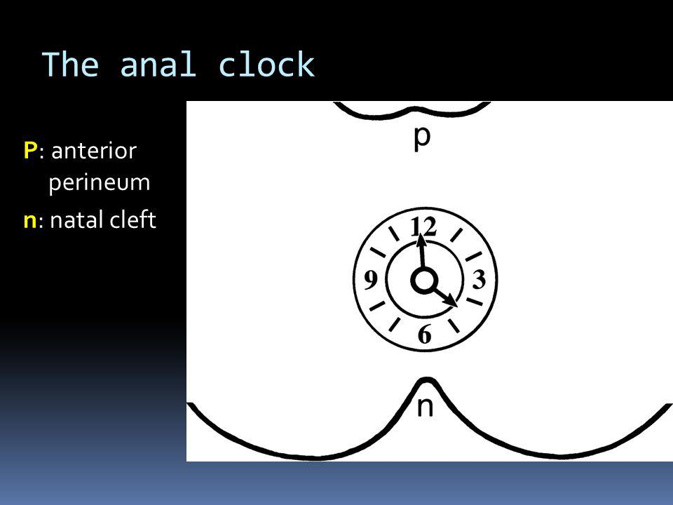 The anal clock P: anterior perineum n: natal cleft