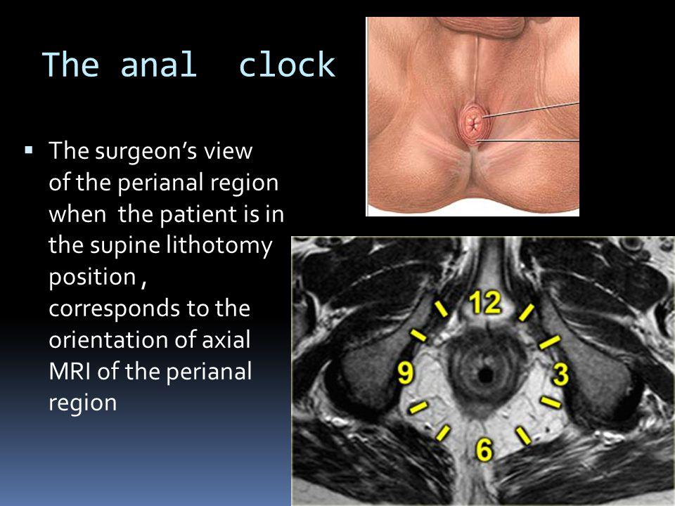 The anal clock