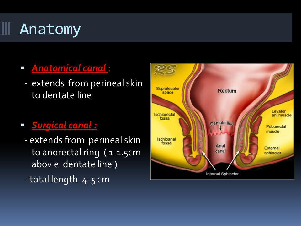 Anatomy Anatomical canal :