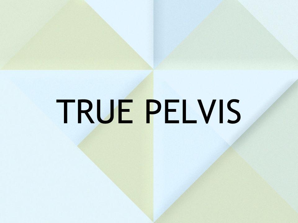 TRUE PELVIS