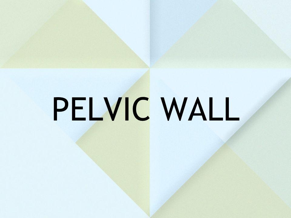 PELVIC WALL