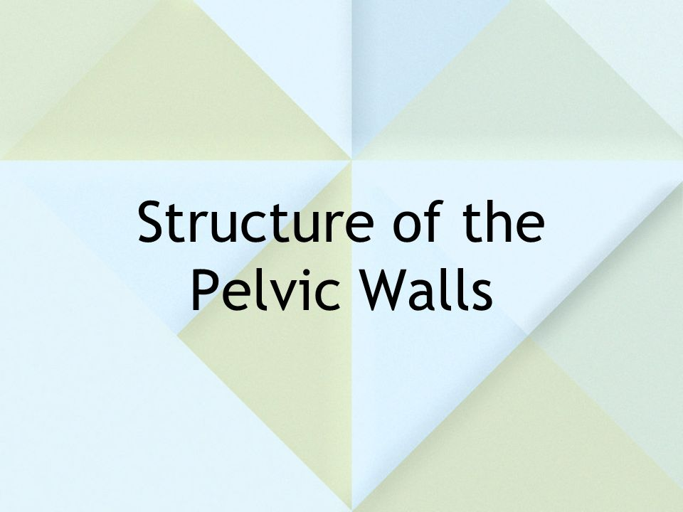 Structure of the Pelvic Walls