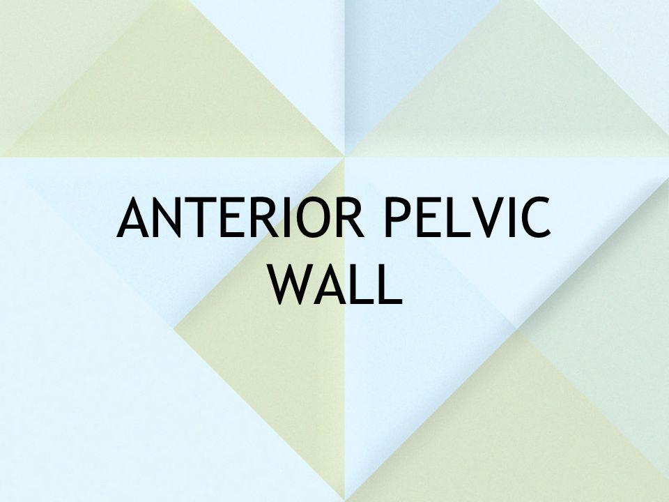 ANTERIOR PELVIC WALL